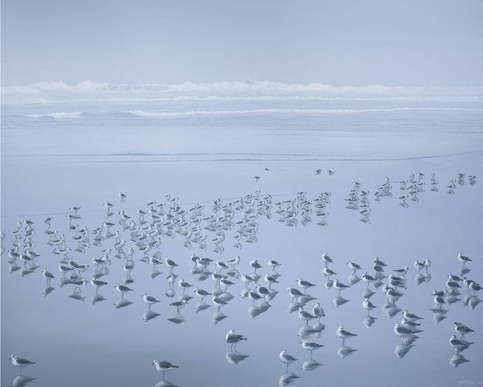 Carol Haigh Sanderlings in the Mist 48x60