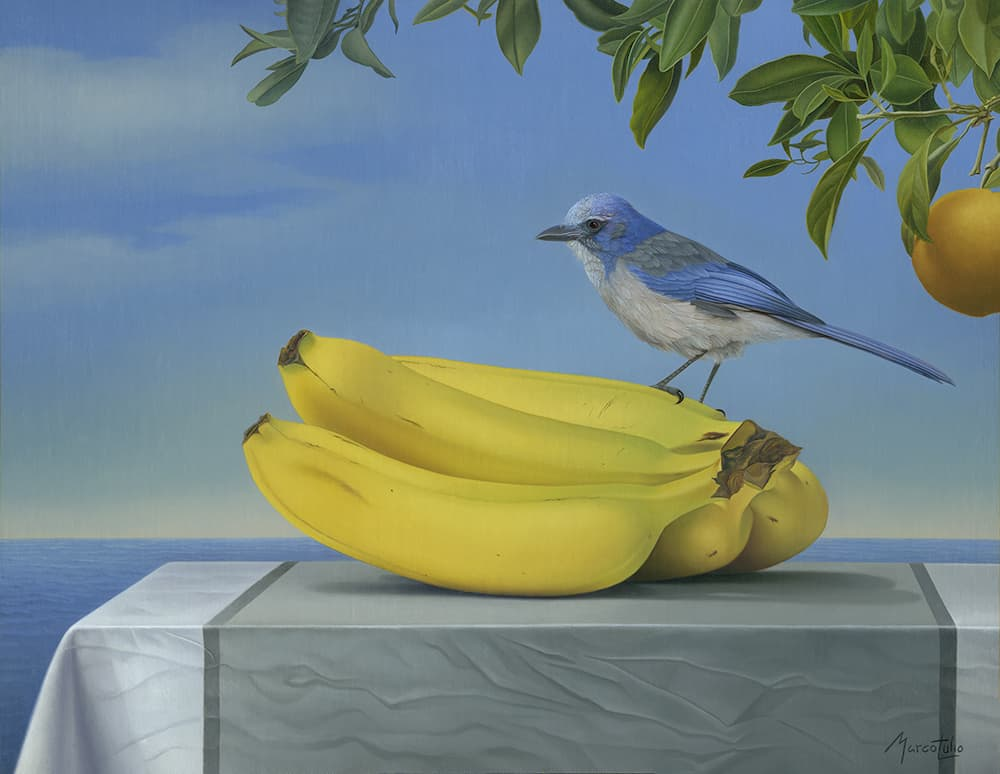 Marco Tulio Jay And Banana