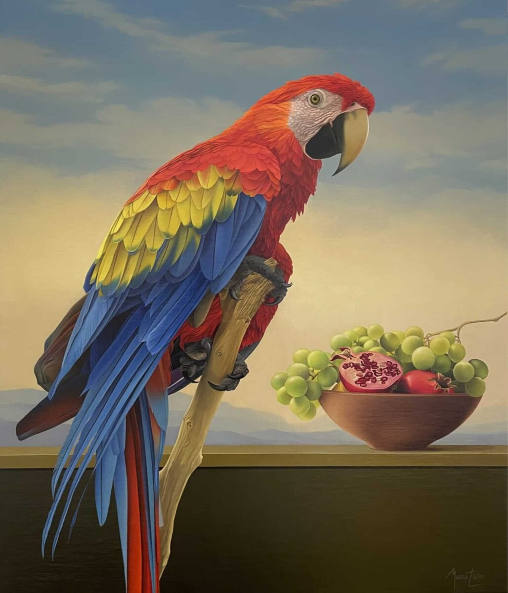 Marco Tulio Macaw