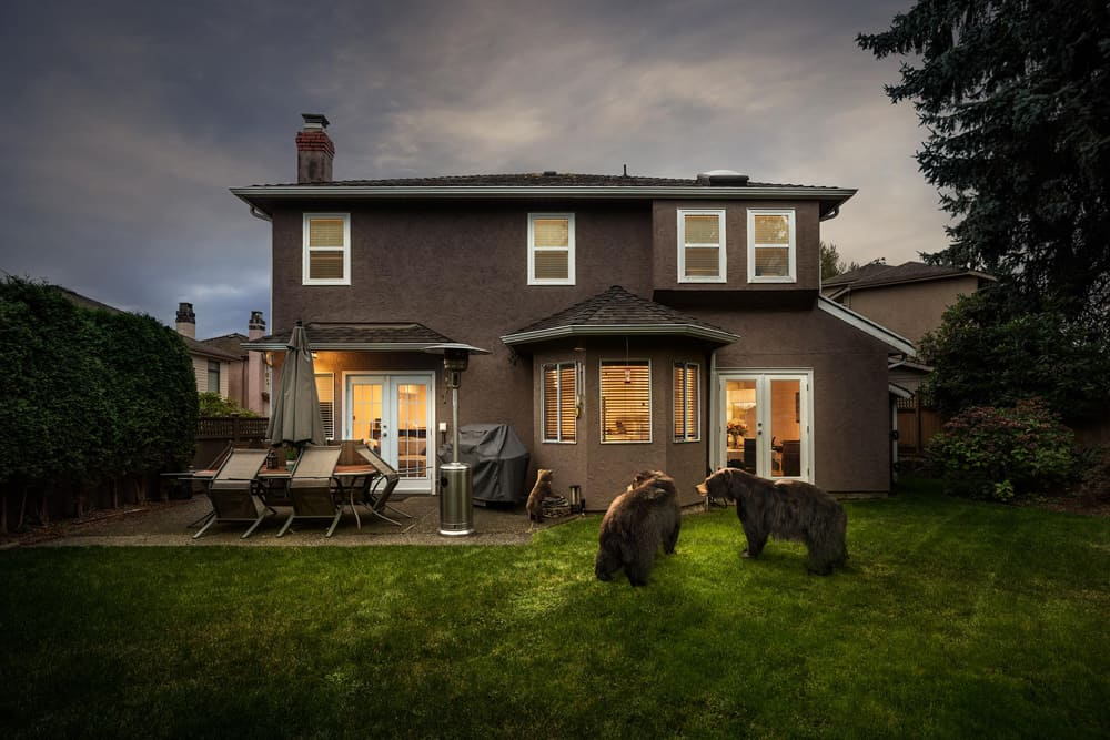 Kevin Lanthier Backyard Bears