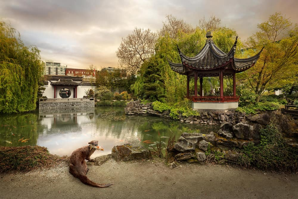 Kevin Lanthier Chinatown Otter