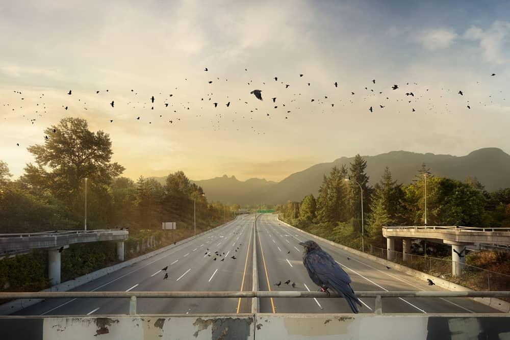 Kevin Lanthier Crow Commute