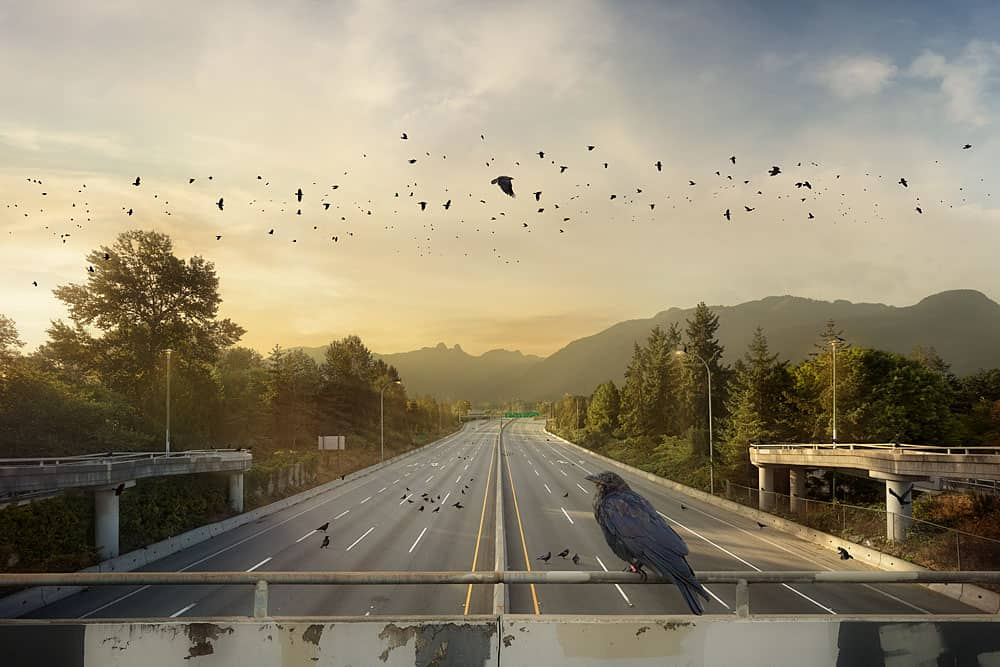 Kevin Lanthier The Crow Commute